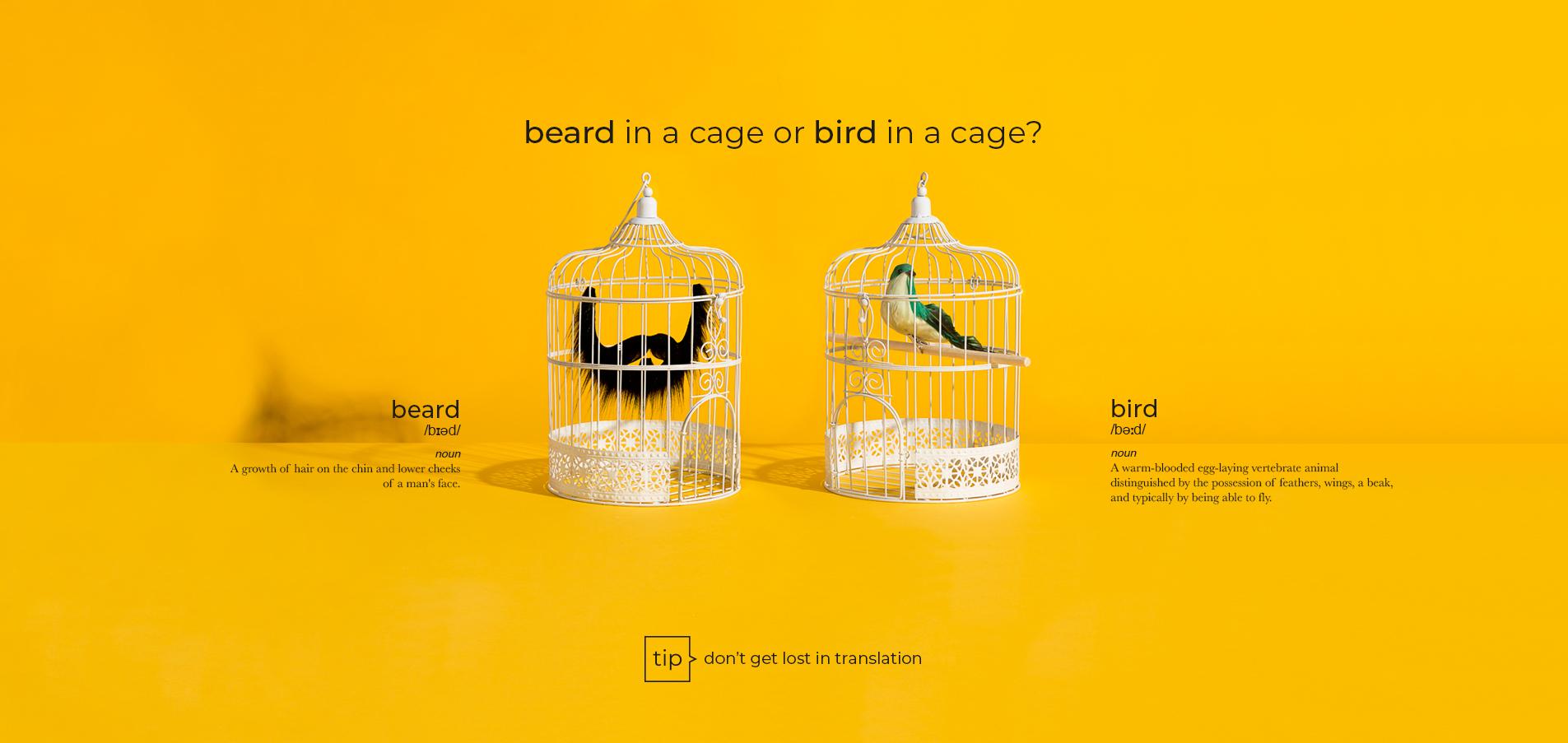 bear bird
