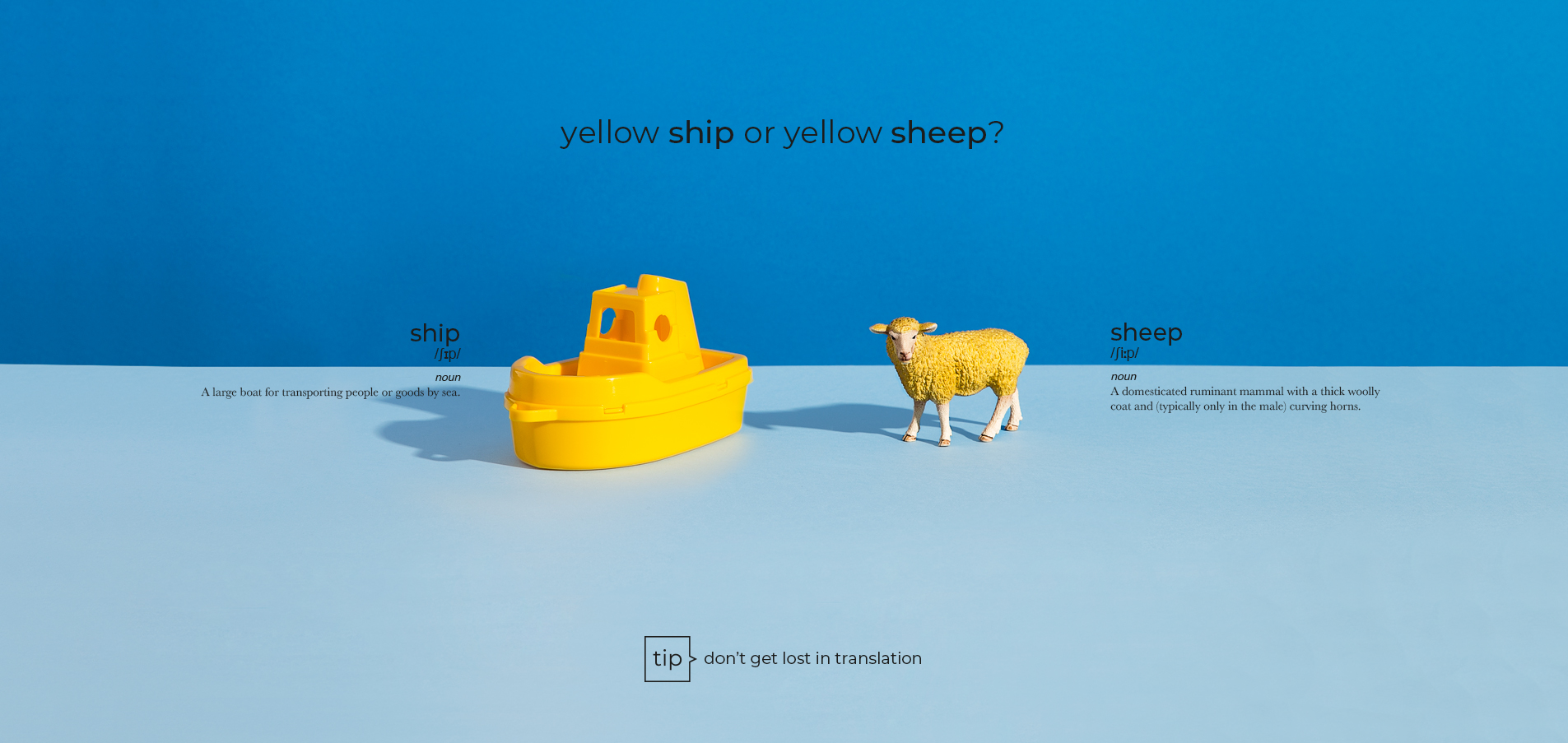 ship sheep